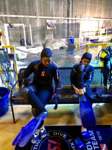 Behind the Scenes Denver Aquarium Shark Dive