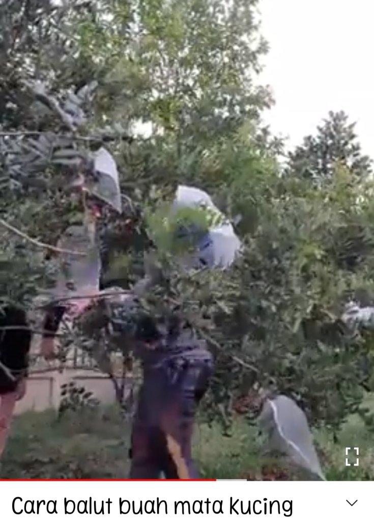 plastik bungkus buah