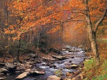 Autumn Winding Brook