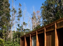 Great Barrier House's Skeletal Timber Frame Allows it to ...