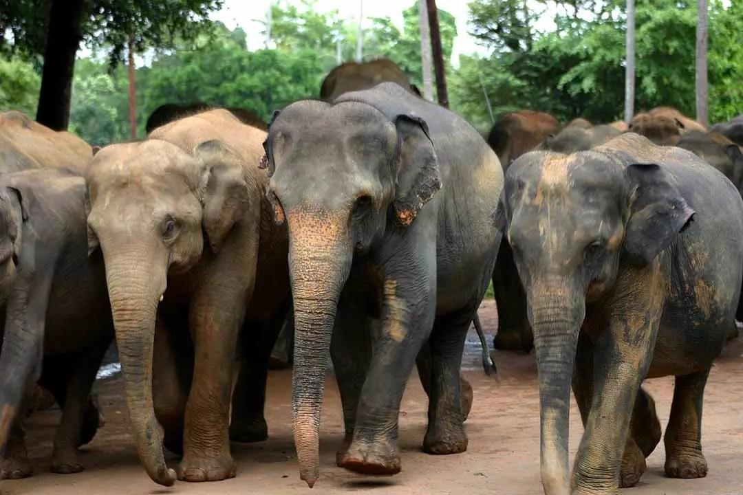 Sri lanka voyage sur mesure