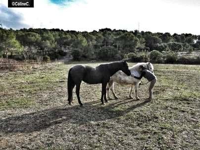 Témoignage communication avec les animaux