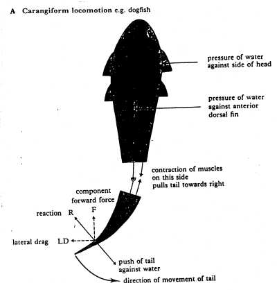Movement of trunk fishes
