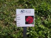 ogni rosa ce ne sono piu di 150 è identificata da un cartellino che ne fornisce le informazioni essenziali