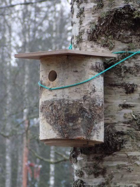 Linnunpönttöjä ripustamassa