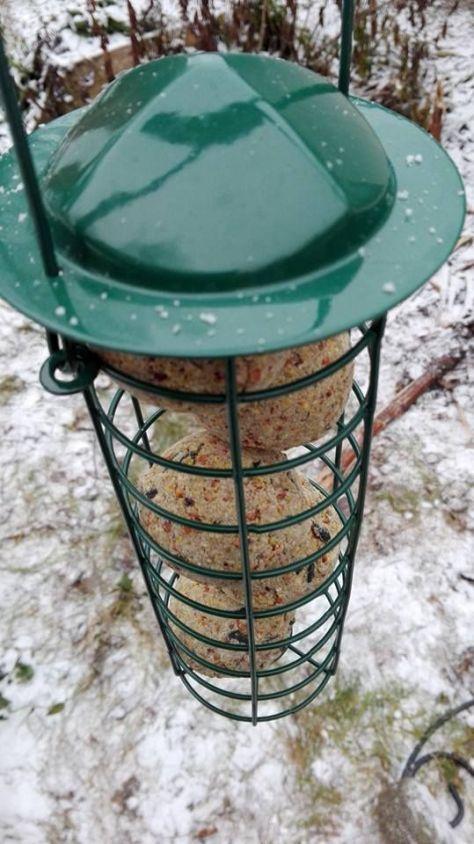 linnunruokinta01