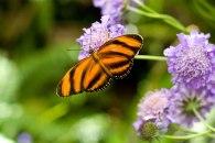 butterfly40