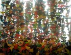 butterfly-curtain-2