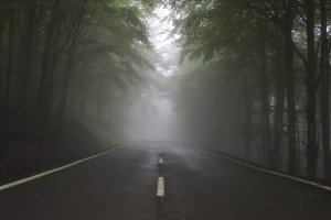 Photo of a road in the misty woods.