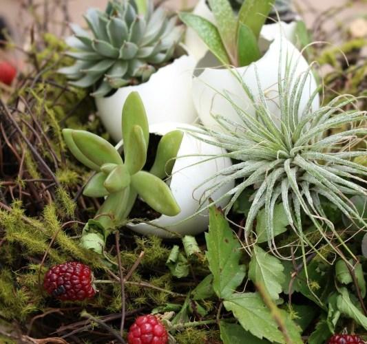 A DIY Living Succulent Easter Basket