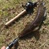 真冬の江津湖でまさかのライギョを釣りました!しかもベイトフィネス