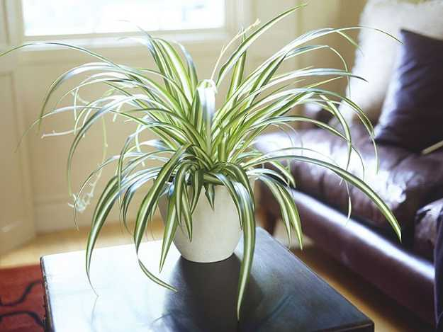 Modern Interior Decorating Ideas Incorporating Indoor