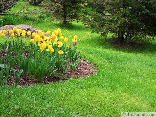 15 Spring Garden Design Ideas, Flower Beds And Evergreen
