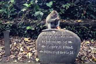 Sacred Monkey Forest Ubud, Bali