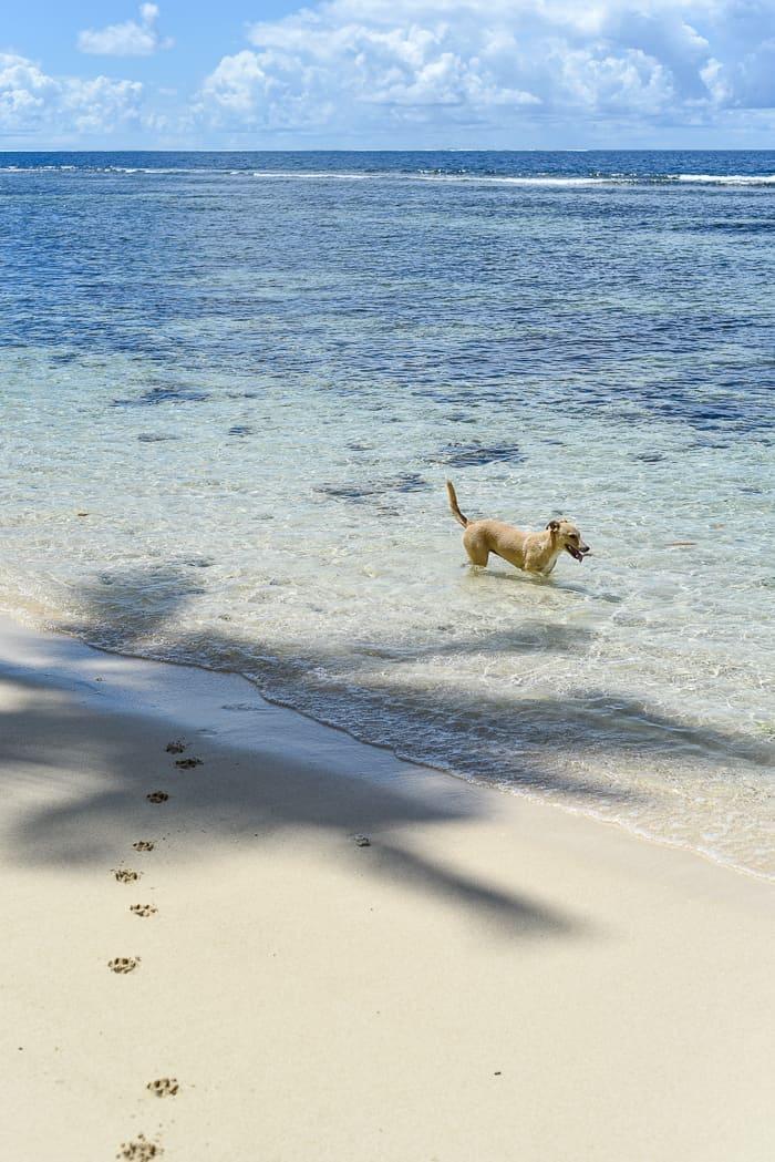 Fiji islands Qamea island maqai eco surf resort