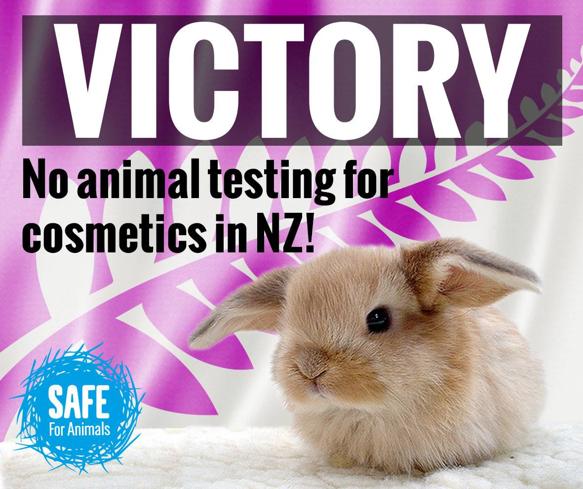 Testing Beauty Fresh Animal Products