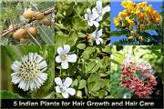 5 indian plants hair growth