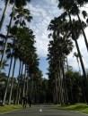 Kebun Raya Bogor punya 313 spesies palem dari 101 genera yang berasal dari seluruh dunia. Lewat jalan yang penuh pohon palem di kanan kiri ini berasa pengen nyanyi dan joget India. Haha