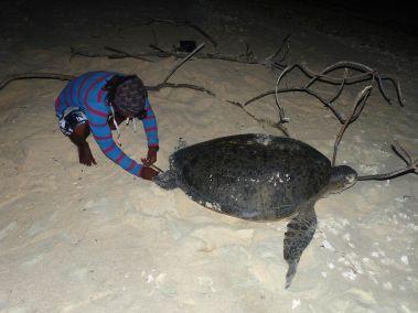 Chris en train de marquer une tortue verte la nuit