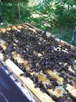 bees1-web