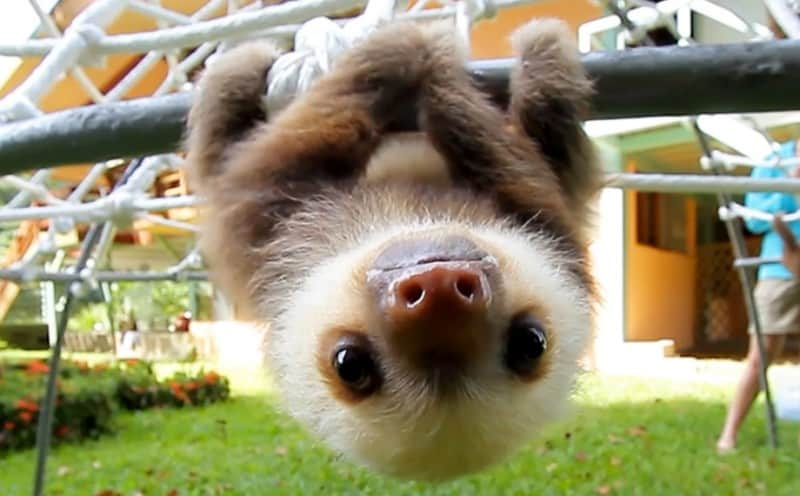 hewan sloth picture