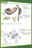 préhistoire dossier 7