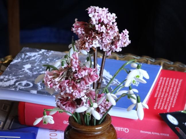 Flowers_16_Feb_2014