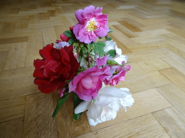 Flower brought to Meeting 14th June 2015