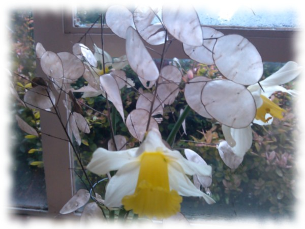 Flowers for 3rd Jan 2016