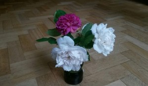 Flowers for 12th June 2016