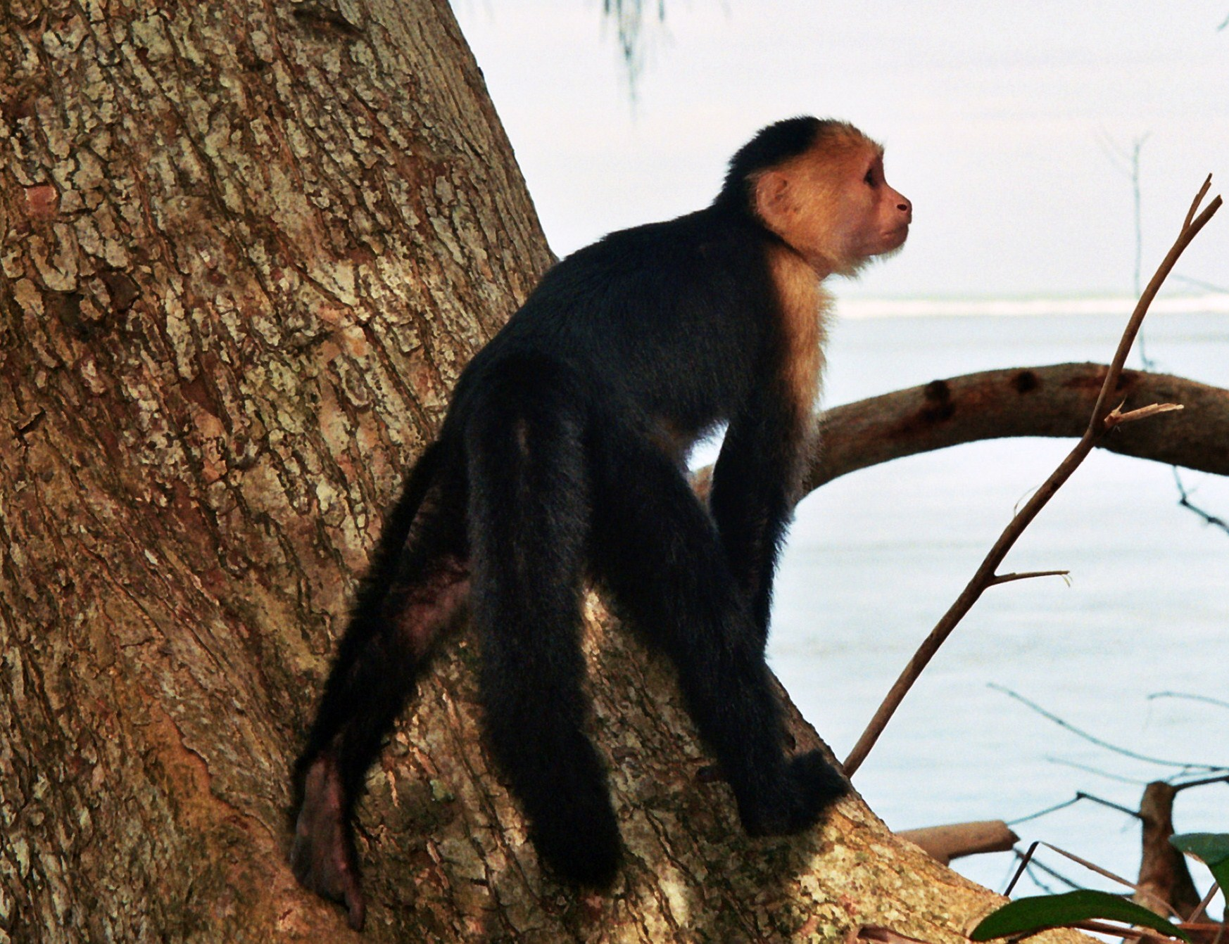 další opička