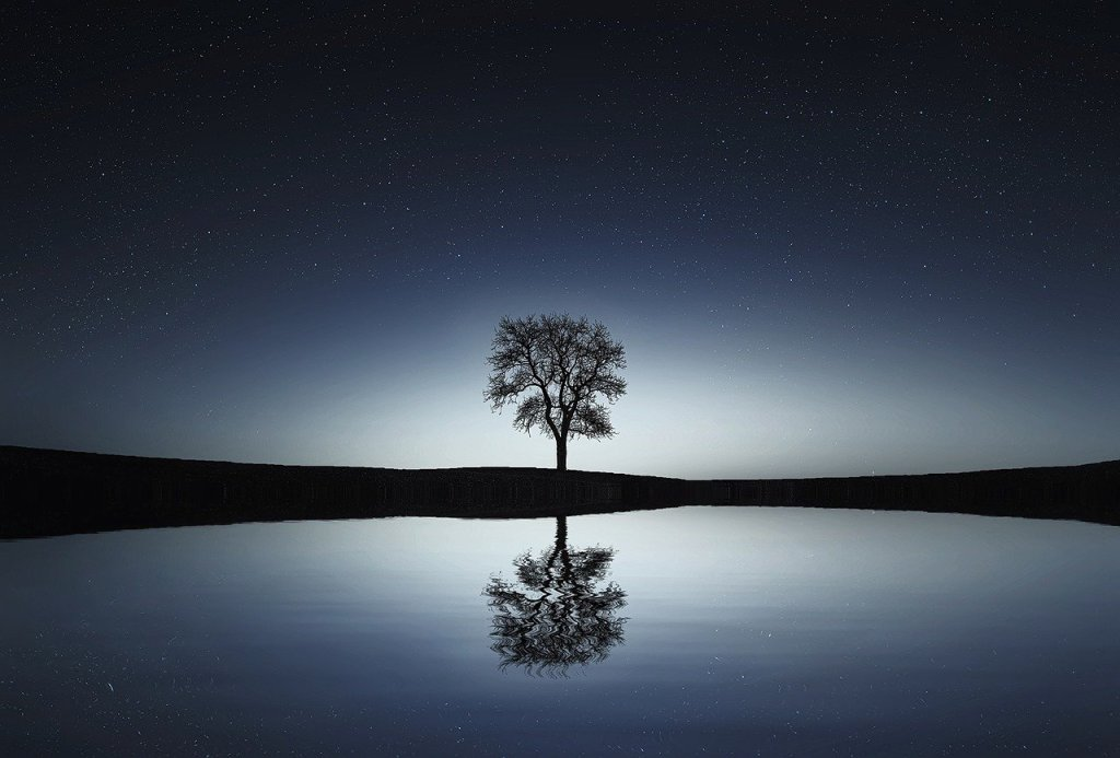 picture of a reflection of a tree