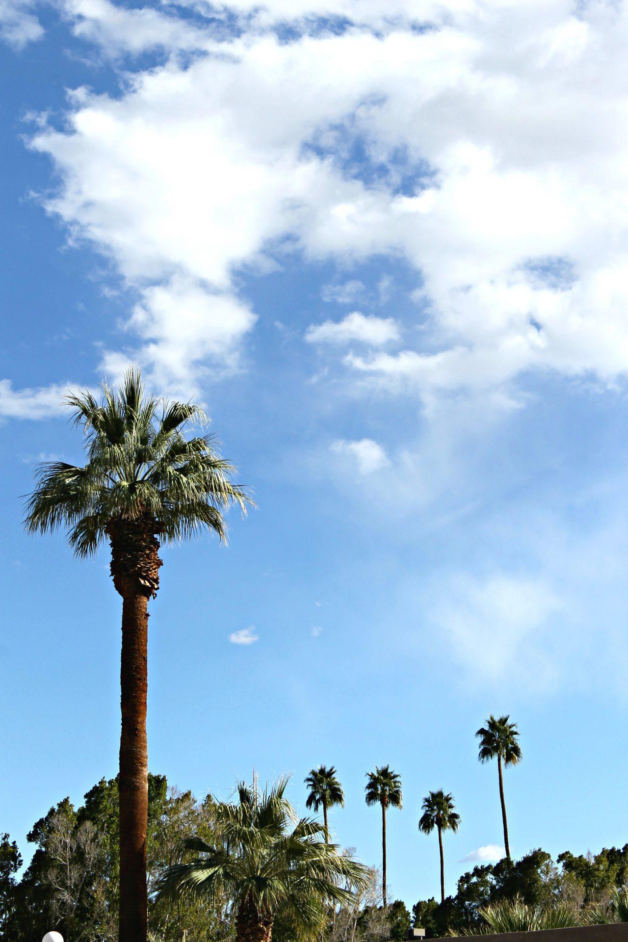 Palm Springs Trees