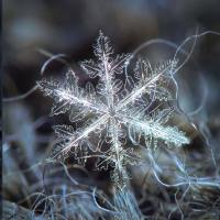 The Natural Beauty Of Snowflakes