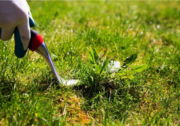 blade på græsplænen