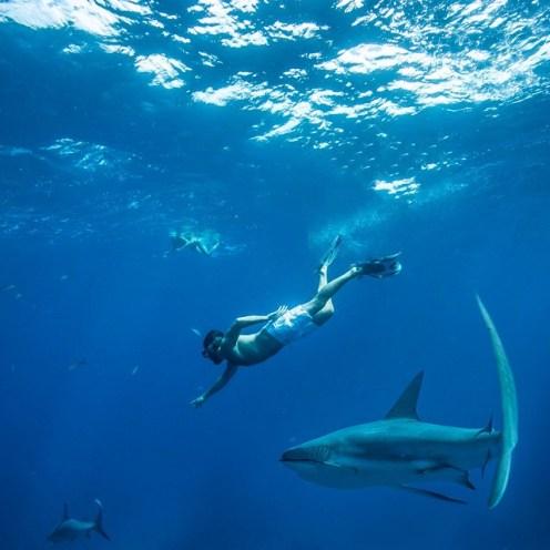 Martin Medus Bahamas shark