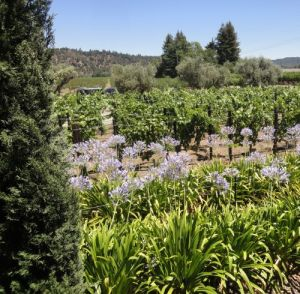 Napa Valley - the benchmark for wines