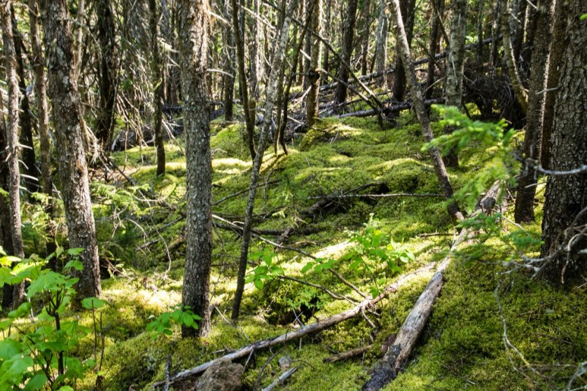 The lush mossy forest.