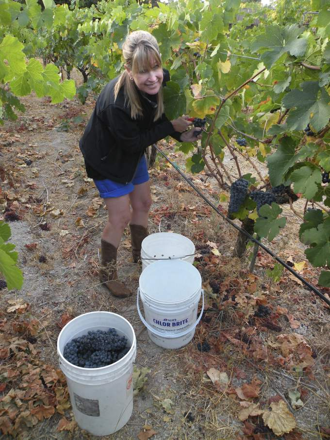 Wine Tips - Paula Moulton