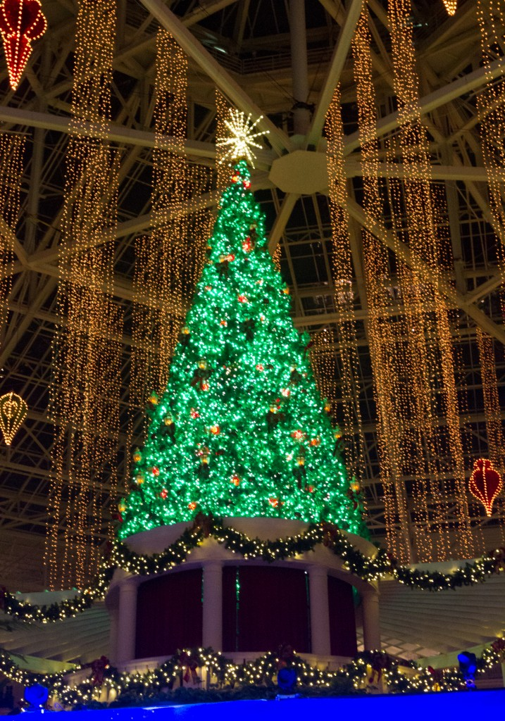 Gaylord Palms Tree