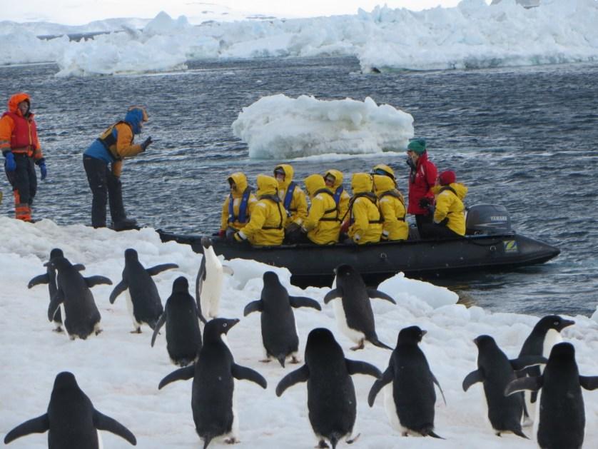 Antarctica Penguins