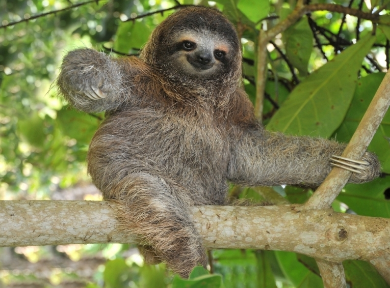 JANUARY article, Rachel Weil, sloth, pulled from internet, pic 13