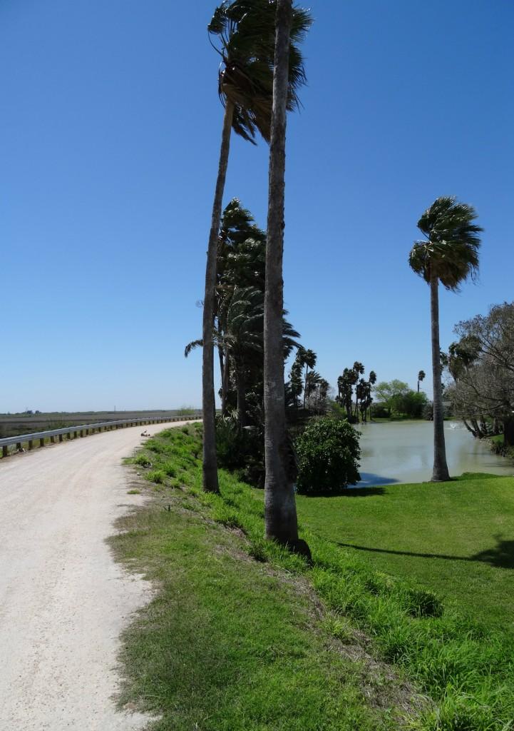 levee surrounding Llano Grande