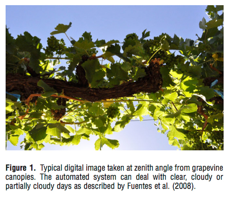 vineyard of the future