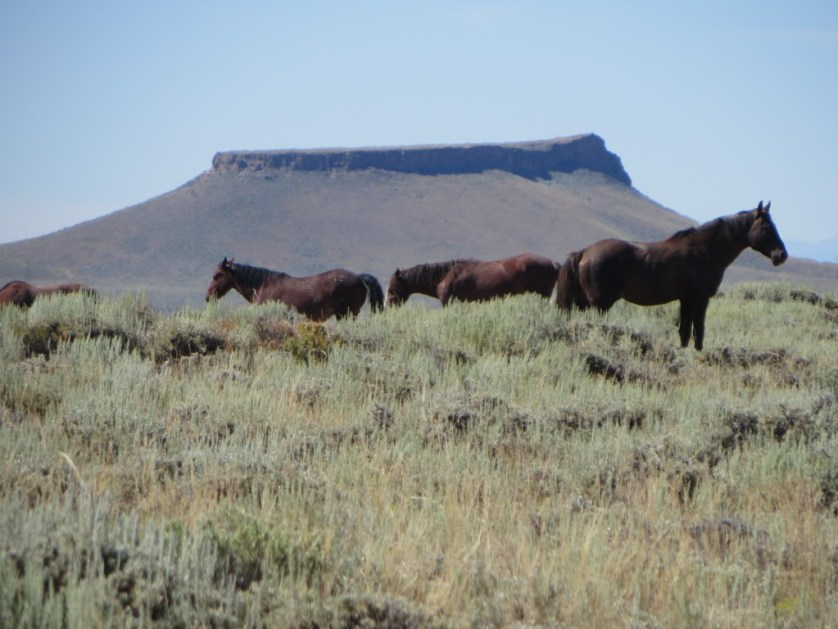 Experience the WOW Factor of Sweetwater County