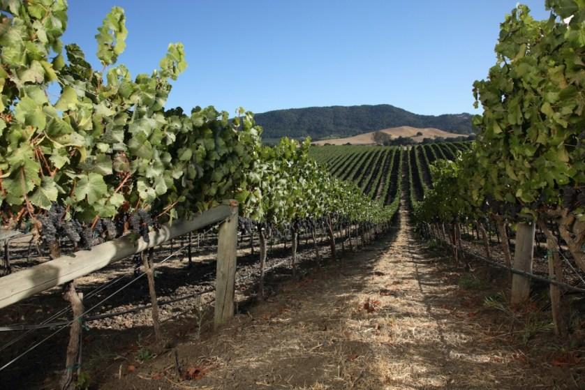 Domaine Carneros Estate Vineyards.