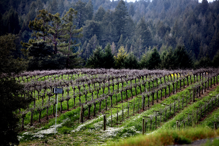 Benovia Winery Releases Spectacular 2014 Single-Vineyard Pinot Noirs