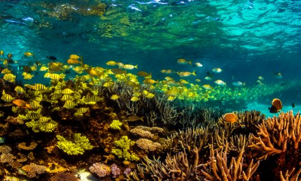 Explore Australia's Largest and Undiscovered Fringing Reef
