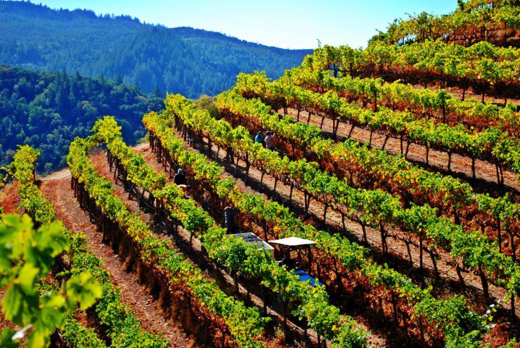 Immortal Estate vineyard