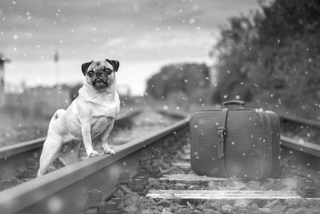 dog train travel